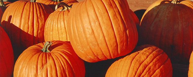 On Friday, October 27, 2017, the whole school will be taking part in a Halloween Pumpkin Carving/Decorating activity. Classes will be paired up with their buddy class. Each student will […]